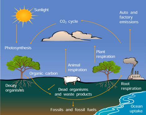 雅思写作task1小作文流程图范文--大自然的碳循环图片